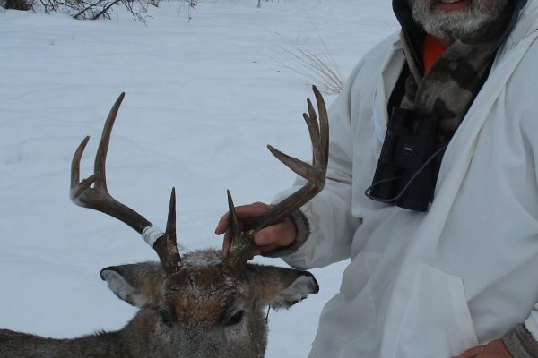 Kirk's White Tail Deer Buck at Elusive Saskatchewan Whitetail Outfitter